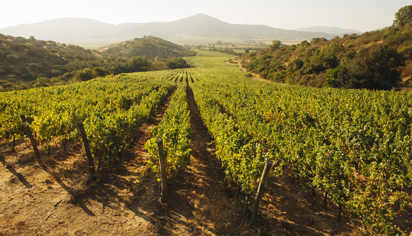 Casablanca Valley in Chili - Ventisquero Reserva Pinot Noir