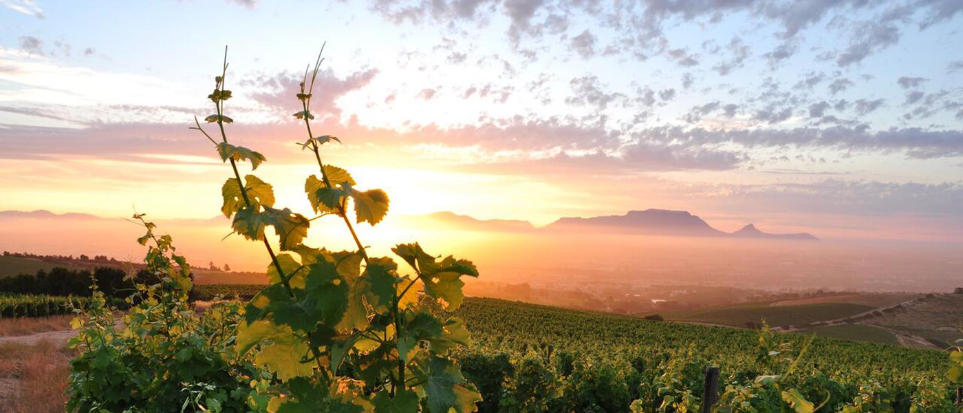 Zuidhorn ontdekt wijnen van Mooiplaas Wine Estate_overzicht wijngaarden